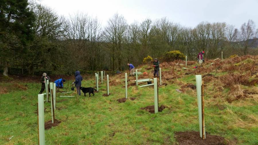 Busy day tree planting